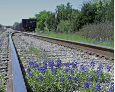 Train_bluebonnet_blog_2